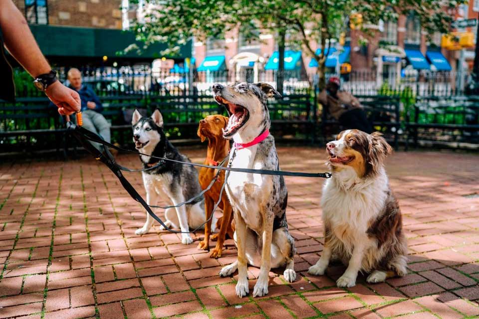 perros_paseo
